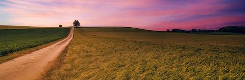 Foto d'estoc gratuïta de a l'aire lliure, agricultura, alba