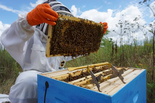 Person Holding Beehive Frame