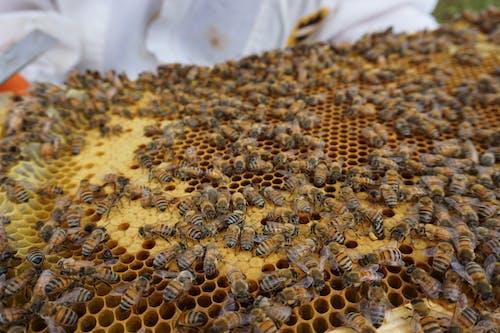 Free stock photo of beehive, beekeeping, bees