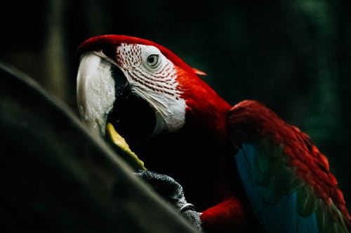 Kostnadsfri bild av ara, djur, djurfotografi, exotisk