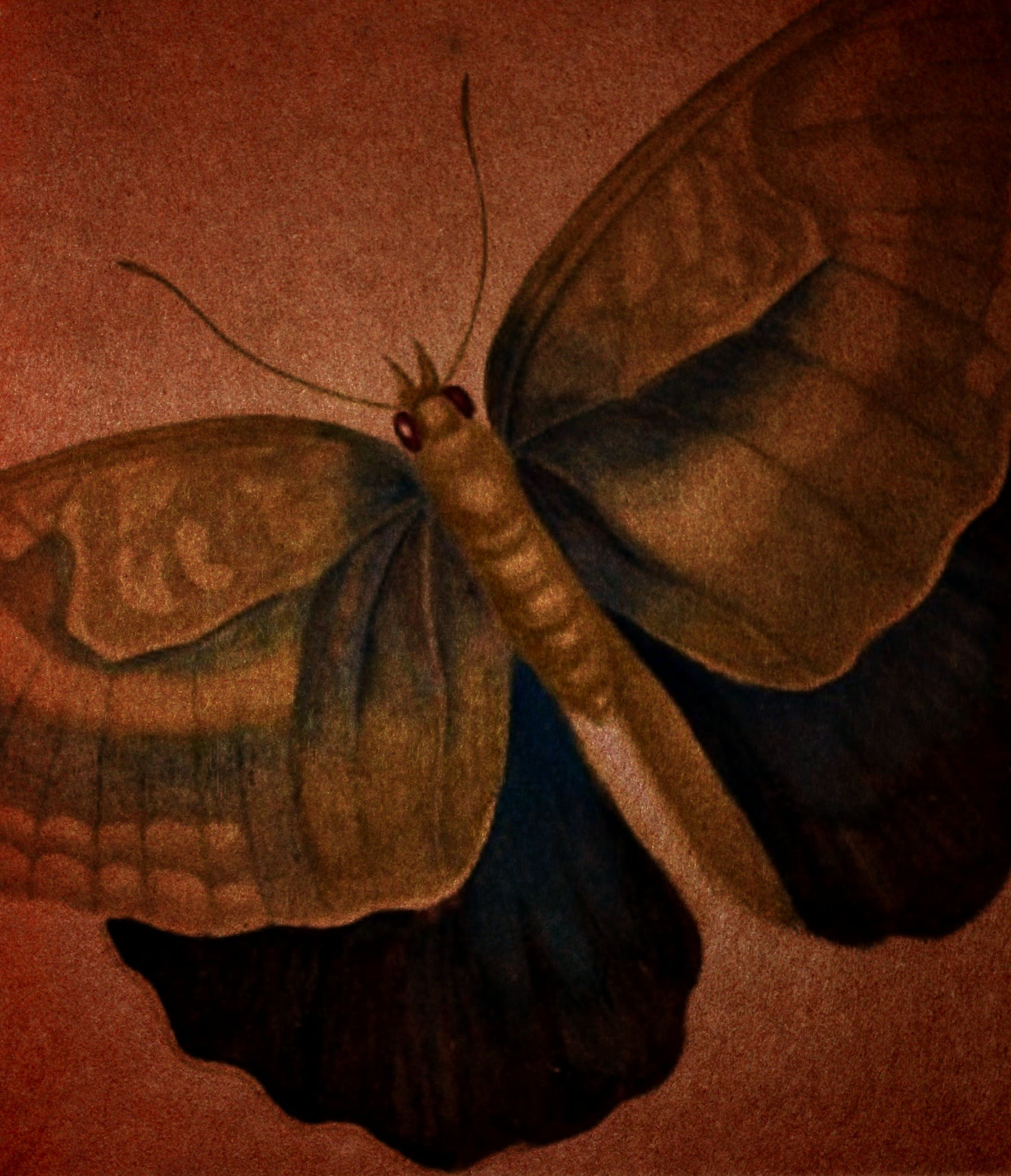 Free stock photo of aged, background, brown, butterfly