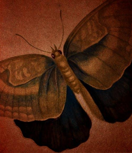 Gratis arkivbilde med bakgrunn, brun, sommerfugl
