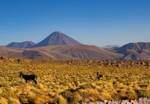 Free stock photo of arid, cactus, dawn