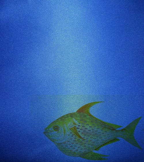 Free stock photo of background, blue, fish