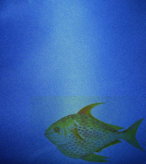 Gratis arkivbilde med bakgrunn, blå, fisk