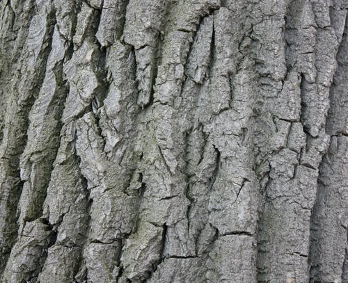 Free stock photo of background, bark, texture, wood