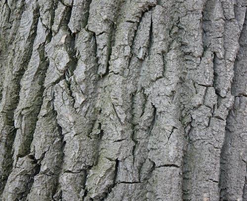 Darmowe zdjęcie z galerii z drewno, kora, szczekać, szczekanie