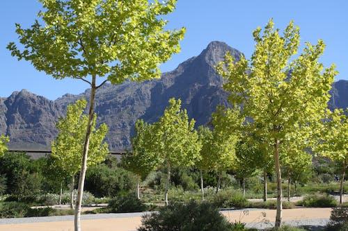 ワイン, 山岳, 木の無料の写真素材