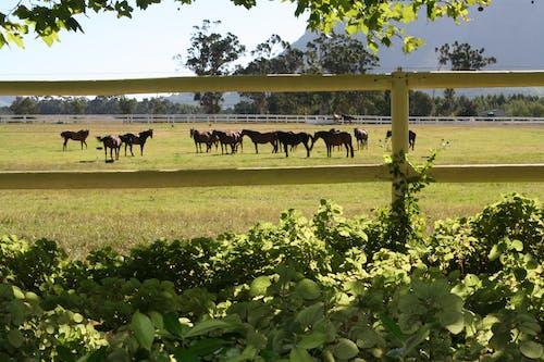競走馬の無料の写真素材