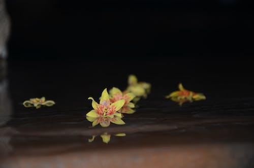 フラワーズ, 水, 浮かぶ花の無料の写真素材