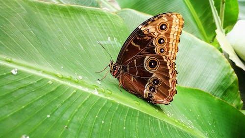 Бесплатное стоковое фото с бабочка на цветке, бабочки, зеленый, фото природы