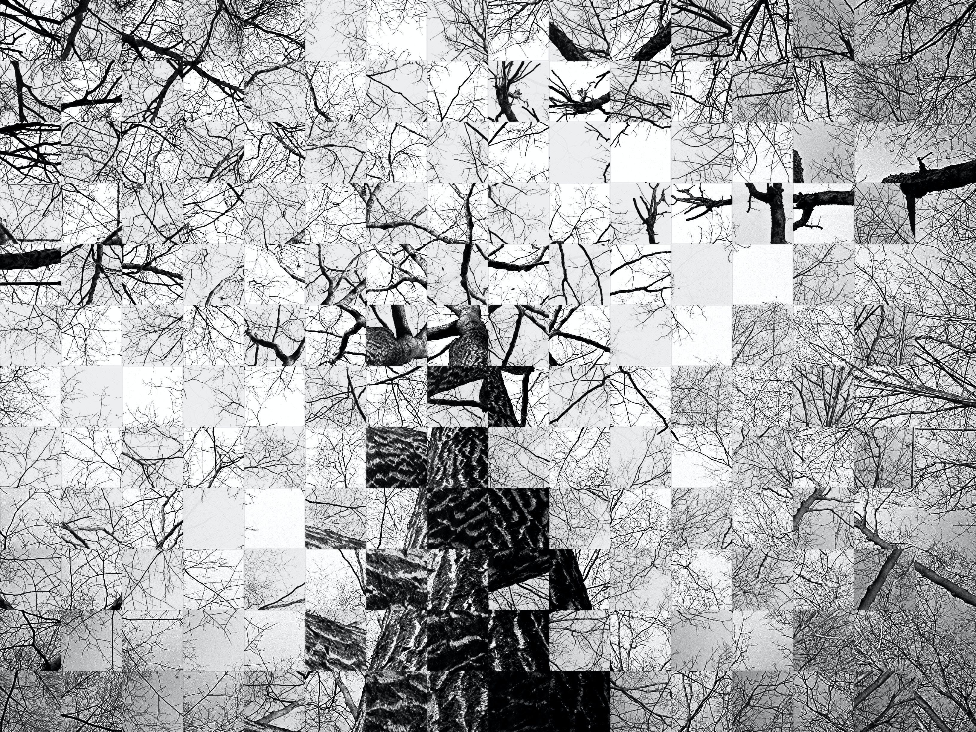 Free stock photo of Generative art, Broken tree, justifyyourlove