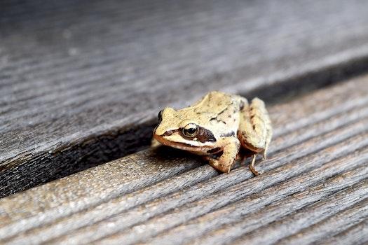 Free stock photo of animal, frog, amphibian
