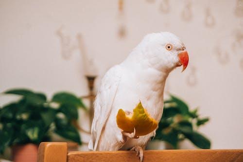 Imagine de stoc gratuită din animal, animal de casă, animal de companie