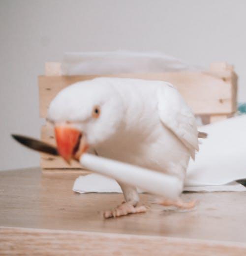 Imagine de stoc gratuită din animal de casă, animal de companie, papagal