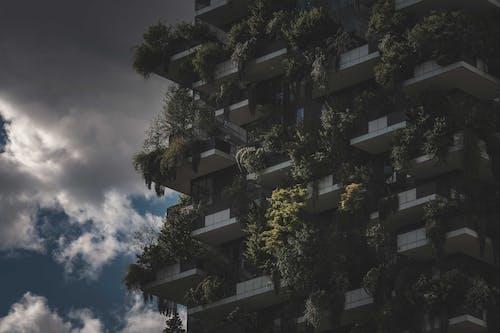 Gratis stockfoto met architectuur, boom, buiten