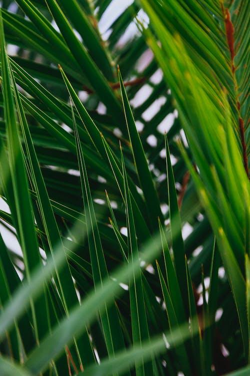 Бесплатное стоковое фото с большой лист, выращивать, дерево
