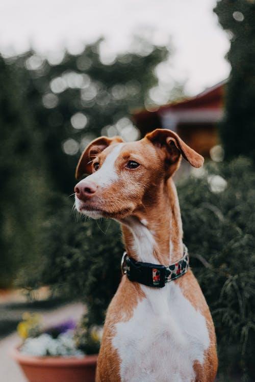 Бесплатное стоковое фото с верность, голова собаки, домашнее животное фотография