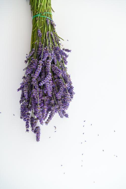 Ingyenes stockfotó ág, aromaterápiás, fa témában