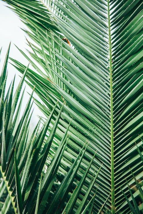 Ingyenes stockfotó botanikus, buja, egzotikus témában