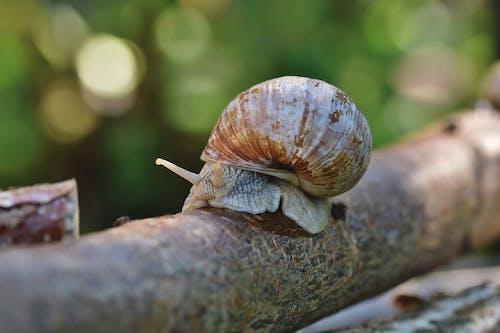 Brown Snail on Brown Tree Trunk