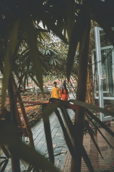 Free stock photo of couple, tree, old, new year