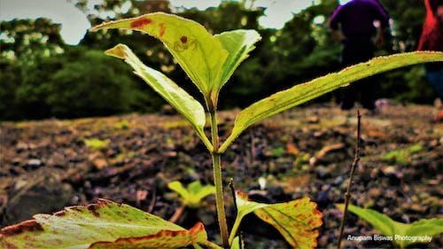 Free stock photo of Anupam Biswas, green leaf, justifyyourlove, spider