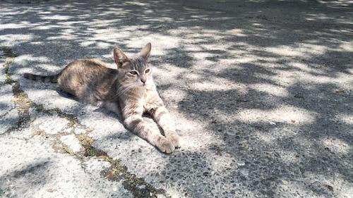 Free stock photo of animal, asphalt, cat