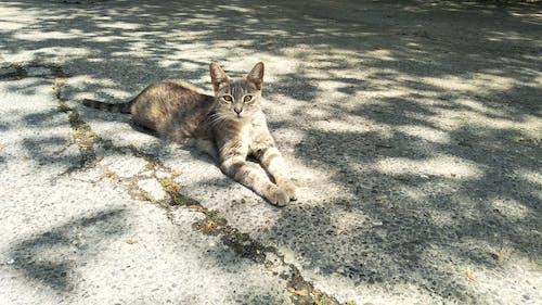 Free stock photo of animals, asphalt, cat