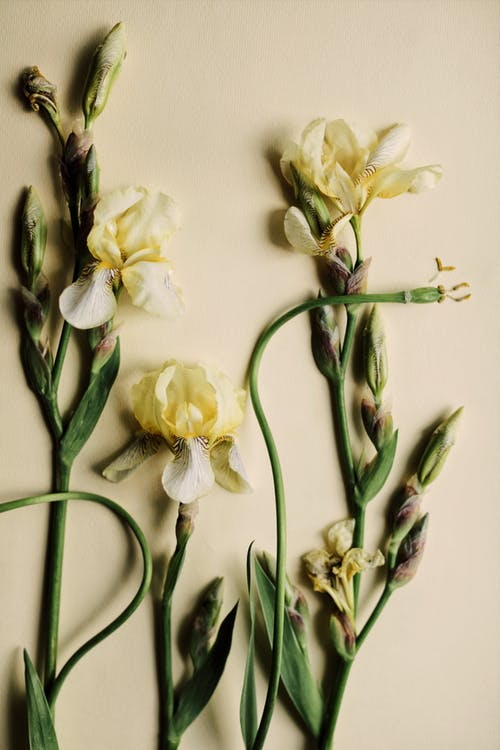 White and Yellow Flowers on White Wall