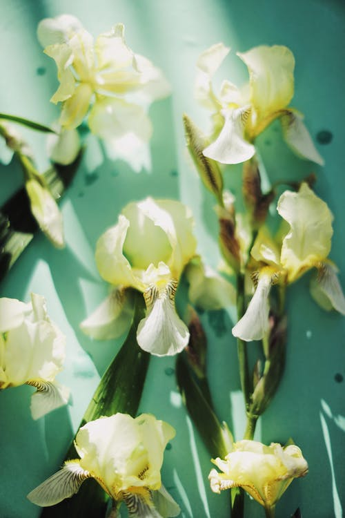 Free stock photo of bright, delicate, disjunct