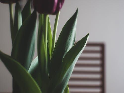คลังภาพถ่ายฟรี ของ 35 มม., ดอกไม้, ม่วง, วินเทจ