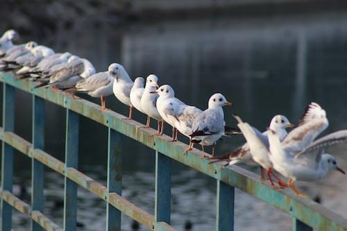 Бесплатное стоковое фото с водоплавающие птицы, животное, на жердочке