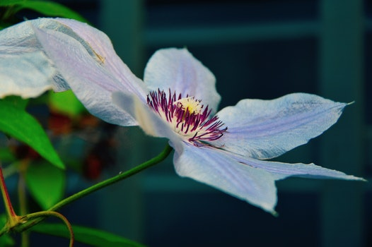 White and Purple Broad Petal Flower