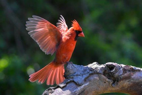 Free stock photo of avian, bird, log