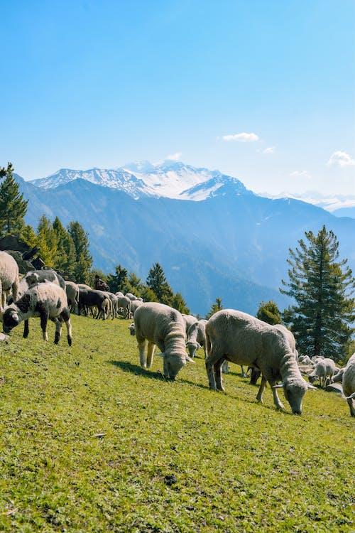 Безкоштовне стокове фото на тему «Альпійський, блакитне небо, вертикальні постріл»