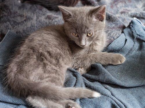 Gratis stockfoto met beest, fluffig, kat, katje