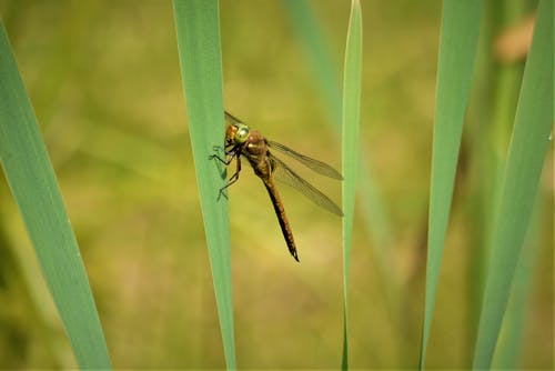 Gratis lagerfoto af blade, guldsmed, insekt