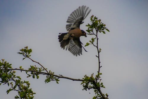 Free stock photo of bird hunting fly