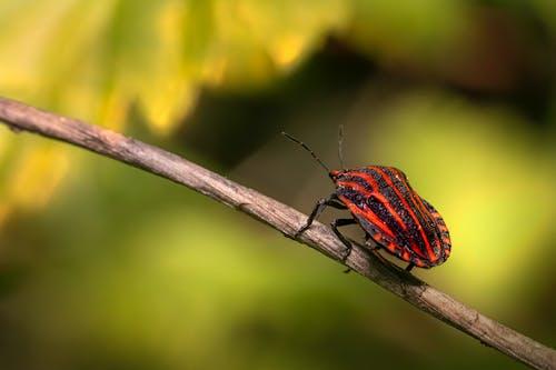 Free stock photo of animal, antenna, beetle