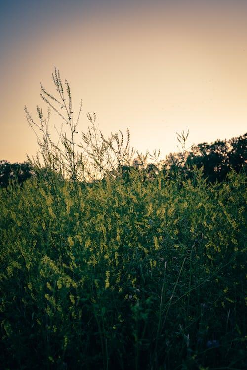 乾草地, 乾草田, 光 的 免費圖庫相片