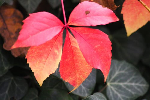 Free stock photo of autumn color, leaves