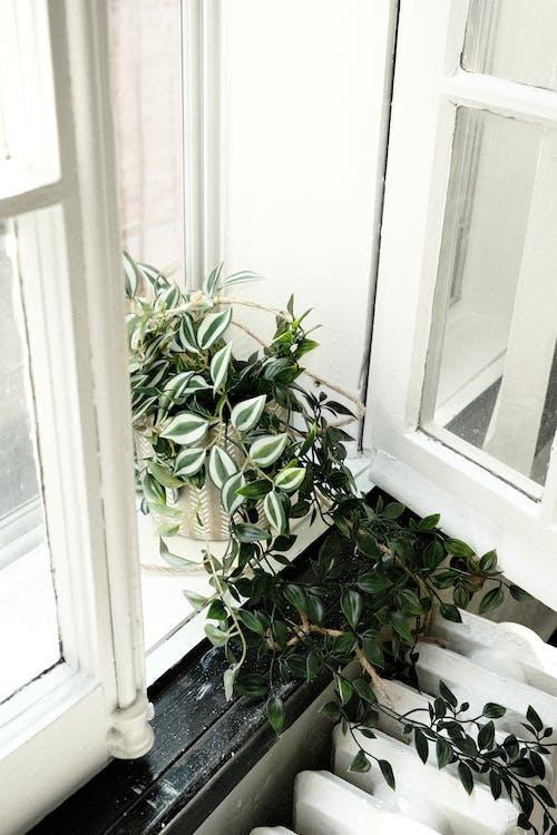 #屋内, ウィンドウを開く, 垂直ショットの無料の写真素材