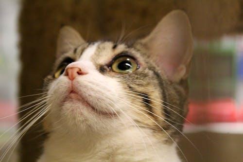 Δωρεάν στοκ φωτογραφιών με Γάτα, ενστερνίζομαι, κατοικίδιο, μύτη