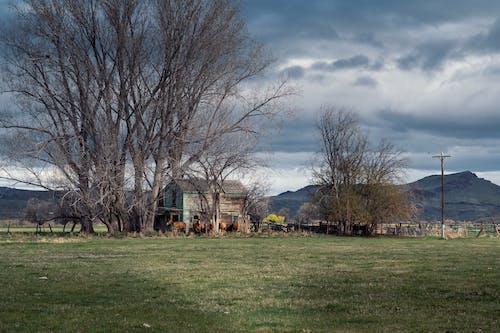 가벼운, 가을, 겨울의 무료 스톡 사진