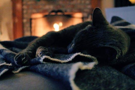 Cat Lying on Cloth