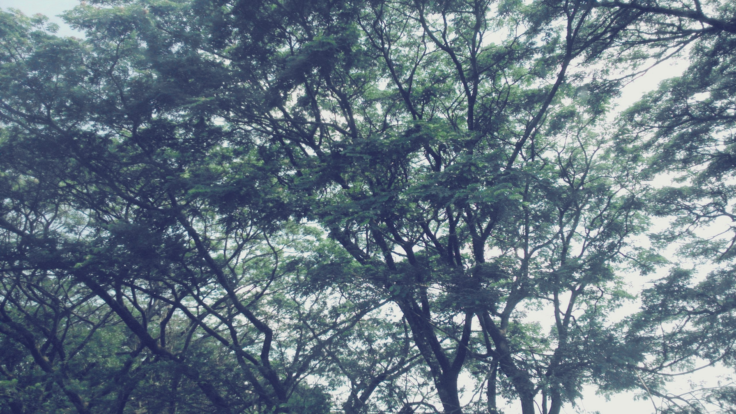 Free stock photo of branch, branches, free wallpaper