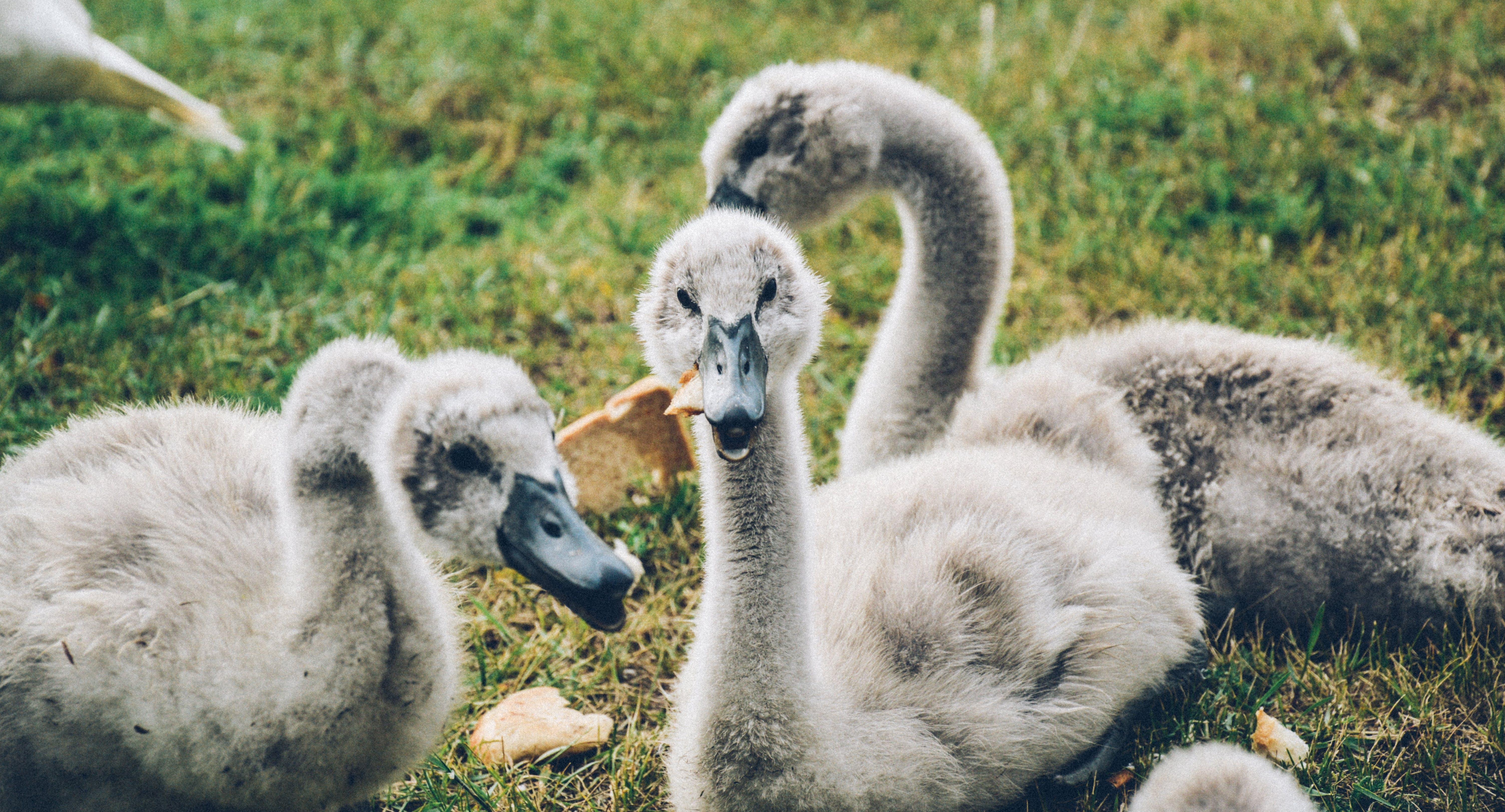 Gray Ducks Under Sunny Sky