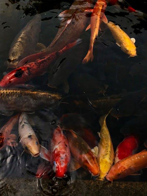 School of Fish on Water