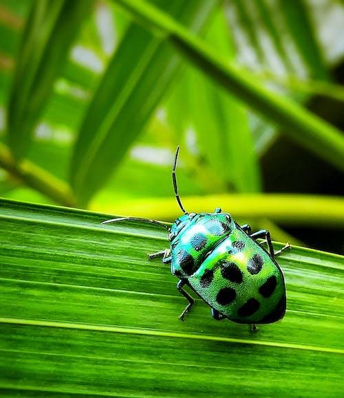 Immagine gratuita di ambiente, animale, antenna